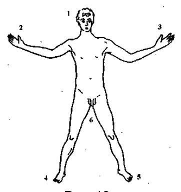 шесть важных областей контакта с внешним миром: лицо, включающее органы чувств в этой зоне, две руки, гениталии и две ноги