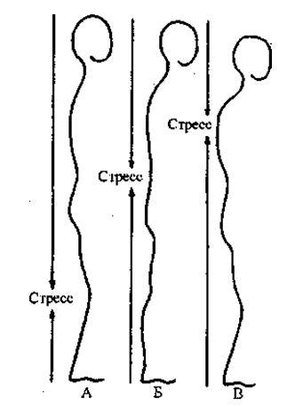 По природе наши ноги приспособлены, чтобы иметь дело со стрессом, не бороться с ним, а реагировать на него. Эта способность является функцией коленей. Действие коленей придает телу гибкость. Колени поглощают удары по организму. Если давление извне слишком велико, то колени подогнутся, а когда давление невыносимо, они согнутся — и человек упадет.