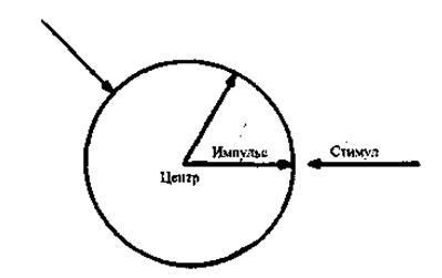 напоминает одноклеточный организм, заключенный в специальную полупроницаемую мембрану, представленную на рисунке кругом